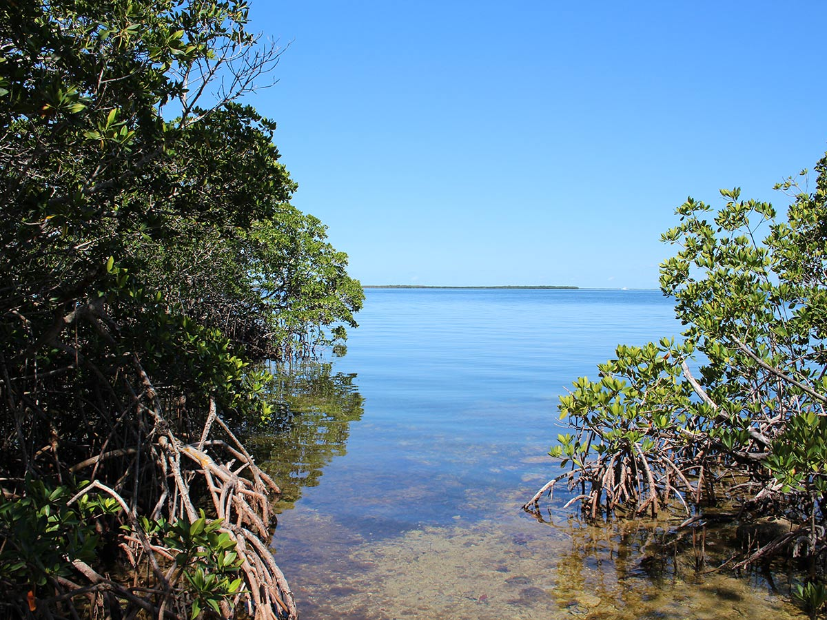 mangroveview
